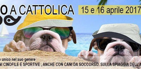 Agility dog a Cattolica